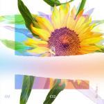 Tải nhạc online [Re:Flower] PROJECT #4 (Single) Mp3 hot