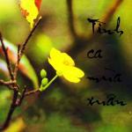 Tải nhạc hay Tình Ca Mùa Xuân trực tuyến