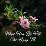 Nghe nhạc mới Nhạc Hoa Lời Việt Cho Ngày Tết về điện thoại