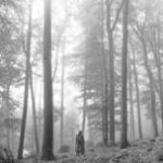 Tải bài hát folklore (explicit)