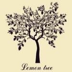 Nghe nhạc hay Lemon Tree (Single) Mp3