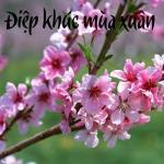 Tải nhạc Mp3 Điệp Khúc Mùa Xuân nhanh nhất