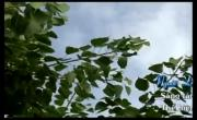 Tải nhạc Mp4 Người Đi Xây Hồ Kẻ Gỗ hot nhất